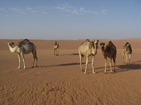 How many camels? A reflection on marriage practices and faith