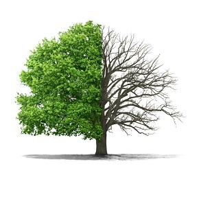 What type of tree areyou?