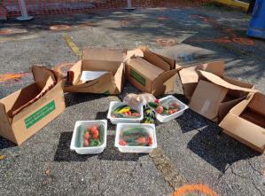 food dumping 1