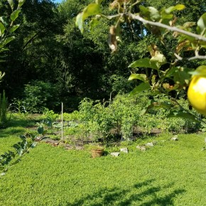 More than Tomatoes for More thanGroundhogs